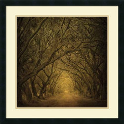 Amanti Art - William Guion 'Evergreen Oak Alley' Framed Art Print 27 x 27-inch - Bring the scenic beauty of the outdoors inside with the lush Evergreen Oak Alley by photographer William Guion.