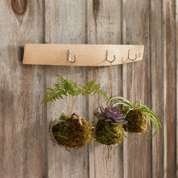 Viva Terra - Barrel Stave Coat Rack - Formerly a wine barrel stave, this recycled white-oak coatrack arches