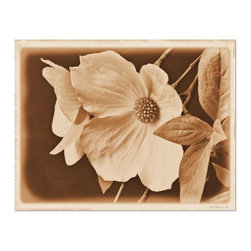 Studio D&K - Large Wall Art Featuring Wild Dogwood Blossoms • Photography on Canvas, 16x20 - Neutral Wall Art on Canvas in Brown and Beige Earth Tones