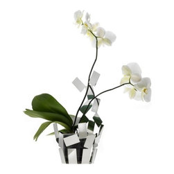 """Alessi - Stanza Scirocco Vase Cover - The Stanza dello Scirocco, a project designed by Mario Trimarchi and presented in 2009 consisting of a small Basket, a tea light holder, a Fruit holder, a centerpiece, and a fruit bowl, has been enlarged to include a vase cover for orchid. Thanks to its light, airy form, this vase cover allows you to perceive a space of light and shadow between the container and its contents. This precious effect is cleverly obtained in a by inserting transparent floral water tubes, like the plastic ones normally used with orchids, into small vase covers. The part of the vase cover that extends upward holds the orchids' stems erect, thereby eliminating the unsightly supports normally used. Features: -Material: 18/10 stainless steel mirror polished. -Dimensions: 14"""" H x 7.5"""" W x 7"""" D."""