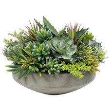 Modern Plants by Diane James Home