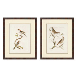 Paragon - Nozeman Birds I PK/2 - Framed Art - Each product is custom made upon order so there might be small variations from the picture displayed. No two pieces are exactly alike.