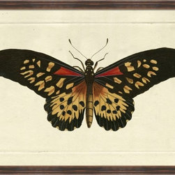 Wendover Art - Naturalists Moth - This striking Giclee on Paper print adds subtle style to any space. A beautifully framed piece of art has a huge impact on a room for relatively low cost! Many designers and home owners select art first and plan decor around it or you can add artwork to your space as a finishing touch. This spectacular print really draws your eye and can create a focal point over a piece of furniture or above a mantel. Each unique art piece is printed & manufactured in the USA. Please allow 4 weeks for delivery as each piece is printed to order & requires careful handling. In a large room or on a large wall, combine multiple works of art to in the same style or color range to create a cohesive and stylish space!