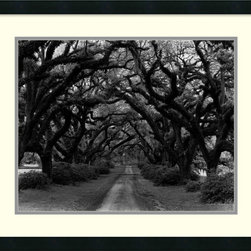 Amanti Art - Path in the Oaks #2, Louisiana Framed Print by Monte Nagler - Even if you're not a Louisianan, you can appreciate Monte Nagler's stunning black and white print. This piece capturing a path of large oaks in the Pelican State comes framed, matted and ready to hang on your unadorned wall.