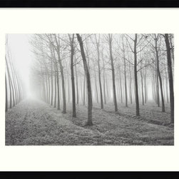 Amanti Art - Poplars, Po River Valley Framed Print by Mark Citret - Haunting and evocative, this black and white shot will make you feel like you're entering an enchanted forest when you hang it on your wall. This poplar landscape print by photographer Mark Citret is bathed in an ethereal light, and comes in a modern black frame.