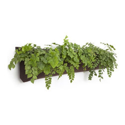 """www.shopboxhill.com - THREE-POCKET ECO FRIENDLY PLANTER - Wally Three is an easy-to-install system that allows professionals and novices to create living walls an living paintings indoors, on walls, rails and chain-link fences. All hardware is included and hanging Wally is as simple as hanging a painting on a wall. For florals, edibles, foliage and succulents, plants of all kinds find Wally to be very cozy. With demensions 15""""H x 68""""W, it is the original Wally times three!!! Create your own flourishing living wall with a few indoor Wally Ones, because Wally is totally modular! Perfect for an organic kitchen herb garden or outdoor edible farms. Tropicals also love Wally, as do Succulents. Even natives have a crush on Wally Three. With Wally, the plantablities are endless! Make plants feel right at home on your patio, rail, fence or gate! Wally is a great host! He'll host your plants at home, school and office. He easily attaches to wood, concrete, masonry and chain link.  He's very easy going and loves to live it up!"""