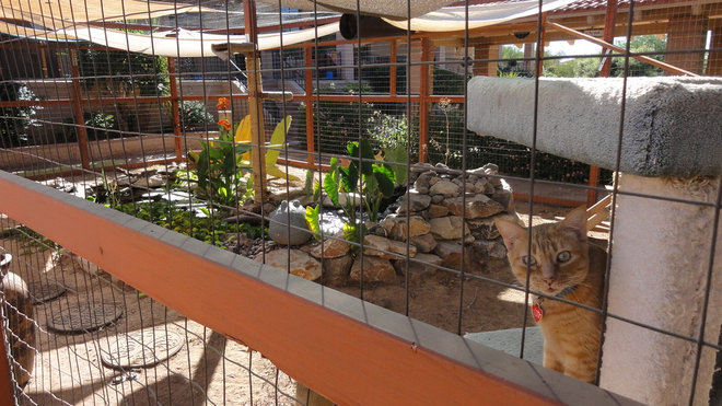 Eclectic Landscape Kitty Enclosure