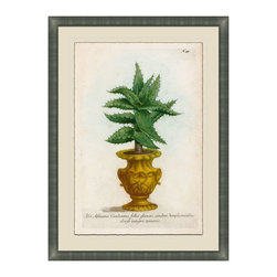 Small Planters - C Framed Giclee - A classic botanical print with antique pot lends an elegant touch to any entry way or living area. For those who love nature but need less maintenance. Adorn your walls with this luscious and exquisitely detailed and framed piece of art, uniquely beautiful and colored in hues of deep greens and gold's. Choose from six and collect your favorites from the collection.