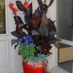 "Container Gardening - Tropicanna® ""Black"" canna in mixed container welcomes guests.  Tesselaar Plants"