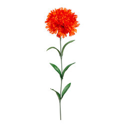 Silk Plants Direct - Silk Plants Direct Carnation (Pack of 12) - Orange - Silk Plants Direct specializes in manufacturing, design and supply of the most life-like, premium quality artificial plants, trees, flowers, arrangements, topiaries and containers for home, office and commercial use. Our Carnation includes the following: