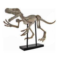 Zeckos - Reproduction Raptor Dinosaur Fossil Skeleton with Display Stand - This amazing sculpture is a wonderful addition to homes, classrooms, restaurants, and offices. Made of cold cast resin, it measures 32 inches long, 18 inches tall, and 8 1/2 inches wide. It features a detailed fossilized raptor dinosaur skeleton on a simple black display stand. It is a great conversation piece that is sure to be admired.