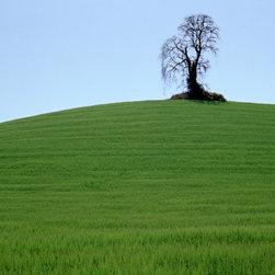 Vineyard Tree - Selected by Gloria Williams Sander, Curator, Norton Simon Museum, as juror.