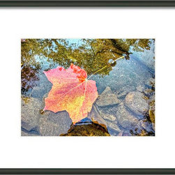 Autumn Leaf in Potomac River - A variety of sizes, mats and frames available. Also available as canvas, metal or acrylic print or as a blank greeting card. Please see site for details on sizes and prices. Thank you.