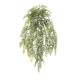 Silk Plants Direct - Silk Plants Direct Mini Maidenhair Fern Hanging Bush (Pack of 12) - Pack of 12. Silk Plants Direct specializes in manufacturing, design and supply of the most life-like, premium quality artificial plants, trees, flowers, arrangements, topiaries and containers for home, office and commercial use. Our Mini Maidenhair Fern Hanging Bush includes the following: