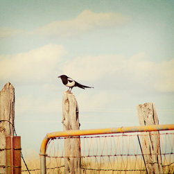 Murals Your Way - The Bird Wall Art - Sitting on an old, time-worn fence post, this black and white bird seems smugly satisfied with the beautiful summer day at hand.