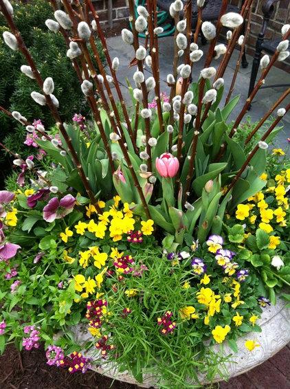 Contemporary Plants by Premier Service