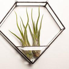 Contemporary Terrariums by Etsy