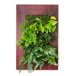Grovert Wall Planter - Cherry - Grow your own lush wall garden with one of GroVert's stunning wooden frames! Each GroVert kit is assembled in six simple steps, making GroVert an effortless way to add greenery to your walls! Watering is simple and clean and keeps your walls dry.