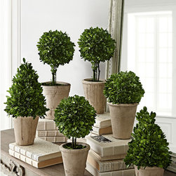 Potted Boxwood Collection - Our collection of preserved boxwoods in limestone pots look like miniatures of the ones you see in French Renaissance gardens. In six sizes, sold individually, they're an easy way to dress up a serving table, mantel, bath, or entry table with greenery for the holidays. Or bring one to a party as a hostess gift - we promise she'll find a place for it through all four seasons.