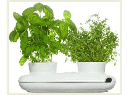 Modern Plants by Greener Grass Design