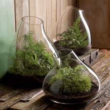 Contemporary Terrariums by SPROUT HOME