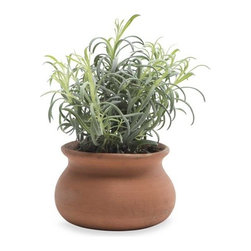 """Viva Terra - Lavender Plant Topiary - Our miniature lavender topiary may be small but it thriveswith endless charm. Perfectly giftable and wonderfulfor greening up smaller spaces. 4""""DIAM POT, 12""""H PLANT* 3-day delivery is included. Choose standard shipping at checkout and this item will be upgraded at  no extra charge. Please see special shipping info for details."""