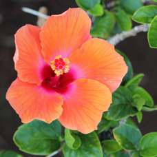 Take-Home Planting Ideas from the Big Island