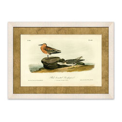 Frontgate - Red Breasted Sandpipers - Red Breasted Sandpipers conveys a sense of seaside leisure and charm. Depicting two delightful birds perched on a shoreline, this framed giclee print is a reproduction of an 1888 chromolithograph originally published in Audubon's Birds of America. Giclee printing ensures the highest resolution quality and spectacular color fidelity. Hand-wrapped burlap mat. Framed in off-white wood molding . Made in USA.
