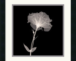 Amanti Art - Bud in Bloom Framed Print - By using x-rays instead of light, an inner vision is revealed, allowing nature to show textures, details, and shadows that would otherwise not be seen.