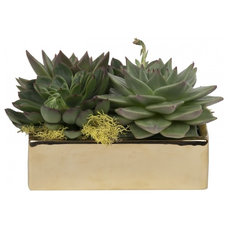 Contemporary Plants by Jayson Home