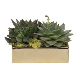 Escheveria In Gold Ceramic - Three words: low-maintenance plants. Is there anything more low maintenance than beautiful succulents artfully placed in a gold ceramic pot?