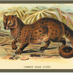 Buyenlarge - Common Palm Civet 20x30 poster - Series: Naturalist Illustration - Jardine