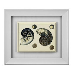 Bassett Mirror - Antique Blue Nautilus Framed Art - Antique Blue Nautilus Framed Art by Bassett Mirror