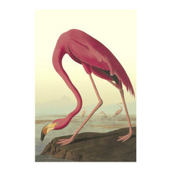 American Flamingo Giclee Print by John James Audubon
