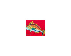 Caroline's Treasures - Fish - Red Fish Woo Hoo Indoor or Outdoor Mat 18 x 27 Doormat - Indoor / Outdoor Floor Mat 18 inch by 27 inch Action Back Felt Floor Mat / Carpet / Rug that is Made and Printed in the USA. A Black binding tape is sewn around the mat for durability and to nicely frame the artwork. The mat has been permanently dyed for moderate traffic and can be placed inside or out (only under a covered space). Durable and fade resistant. The back of the mat is rubber backed to keep the mat from slipping on a smooth floor. Wash with soap and water.