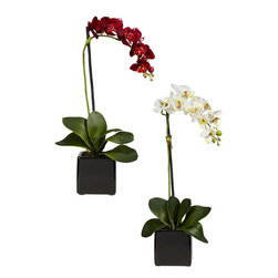 Nearly Natural - Phaleanopsis Silk Orchid with Black Vase - Se - A fantastic, bold addition to any decor. A mix of brightly hued petals. No maintenance or watering needed. Construction Material: Polyester material, plastic, Iron, Glass. 9 in. W x 5 in. D x 20 in. H ( 2.5 lbs. ). Pot Size: 4 in. W x 4 in.H  Elegant and understated, this beautiful Phalaenopsis is certain to be a lovely fixture for even the most refined of environments.  With its delicate blossoms cascading over each other in a streak of pure color, the smooth and rounded leaves, and the sharp, minimalist black vase that houses and defines the arrangement's color, this is a fantastic centerpiece for either the home or office.