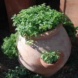 Edible Container Gardening -