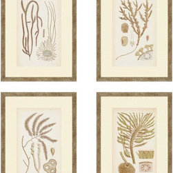 """Paragon Decor - Sea II, Set of 4 Artwork - Liven up those boring walls with this coastal set. """"Sea II"""" includes four portraits of seaweed branches and details. These pieces can be hung vertically, horizontally, diagonally, or any other shape your heart desires! Each piece in this set is surrounded by a cr�me-colored matte and a thin simple beach-inspired frame. Each piece in this set measures 13 inches wide, 1 inch deep, and 18 inches high."""