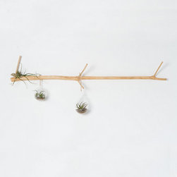 Tamarind Wall Branch - I love how delicate this wood hanging rack is — it's a far cry from the clunky, bulky pieces you so often see. This would be beautiful hanging over a desk or bed with some special items hanging from it.