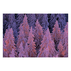 Magic Murals - Snow-Covered Black Forest Wall Mural - Snow Covered Black Forest Wall Mural