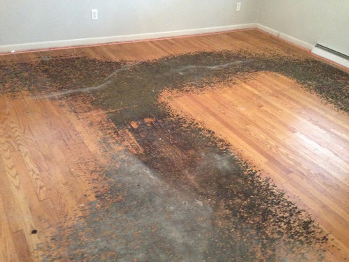 How To Remove Residue From Under Carpet From H W Floors