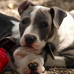 Calzphotography - Create your style - I was asked to do a photoshoot pro bono for a local animal shelter,in order for them to make a calender to raise money. After I had finished the shoot and was leaving,I spotted these two cuties,and could not resist capturing the monment