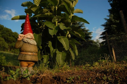 Houzz Users Show Off Their Gnomes