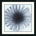 """Amanti Art - """"Dahlia"""" Framed Print by Steven N. Meyers - This exposé of a dahlia reveals a fascinating and sensuous nature. You'll find that after your original infatuation with this amazing photographic print, your love will continue to grow for years to come."""