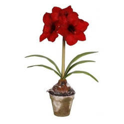 Amaryllis Arrangement