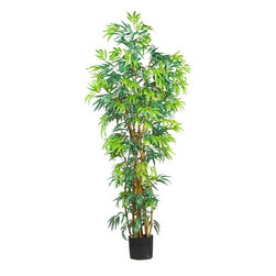 6' Fancy Style Bamboo Silk Tree - Need a break from the office? This grand Bambusa will have you dreaming of the Asian tropics. At six feet tall, this lovely tree makes an excellent conversation piece for your work space or home decor. 1700 wispy elongated leaves flock the two separate clusters of shoots. Best of all, this exotic beauty will thrive carefree in any environment. Height= 6 ft x Width= 36 in x Depth= 36 in