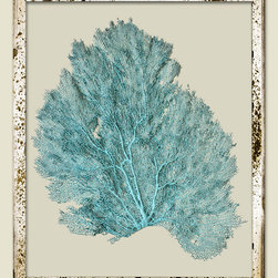 Sea Fans, Teal - These come in several different colors and look great in groups.