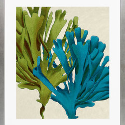 """Art Virtuoso - Ambler Art Multicolored Seaweed P0190A-05676 - The fine art giclee print was inspired by antique engraving from the book A Popular History of British Zoophytes by Rev. D. Landsborough D.D. published in London by Reeve and Co. Henrietta Street Convent Garden ca. 1852. Published exclusively by W. King Ambler Inc. 22 7/8"""" H x 19 7/8"""" W Matted with 2"""" double thick white mat. Framed using moulding 5006 3/4"""" thin panel profile with distressed bright silver finish."""