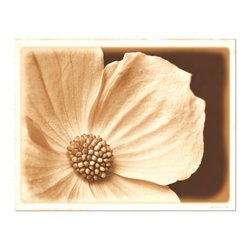 Studio D&K - Dogwood Blossom Fine Art Photography Print • Large Artwork, 16x20 - Neutral Wall Art Print Featuring a Wild Dogwood Blossom