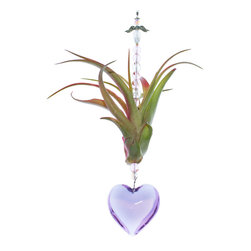Spirit Pieces - Purple Smooth Crystal Heart on Tillandsia Air Plant Valentine's Day Gift for Her - This wonderfully delightful present is a Tillandsia Air Plant coupled with a 40mm Smooth Purple Crystal Heart.  Comes with pink and clear and a crystal angel.